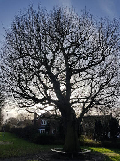 tree-surgeon-Salford