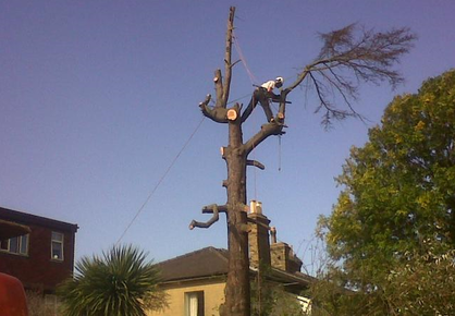 tree-surgeon-Stretford
