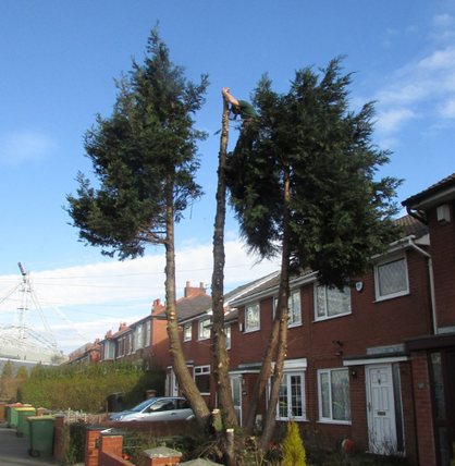 tree-surgeon-in-Urmston