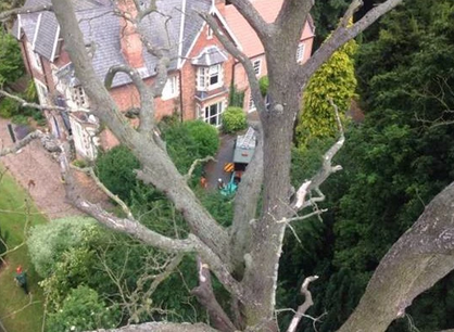 tree-removal-Urmston